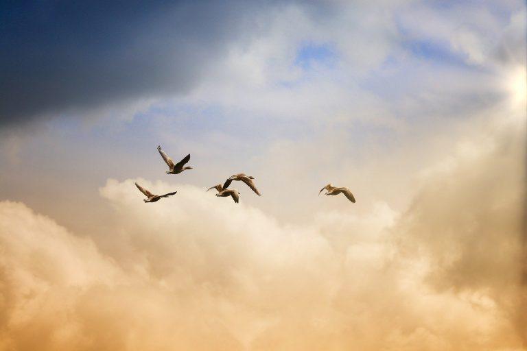 Nur Fliegen ist schöner – KNAUS VAN TI PLUS auf MAN TGE Basis